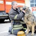 Собаки на службе пожарных и спасателей
