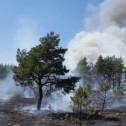 Лесные пожары. Методы их профилактики и обнаружения