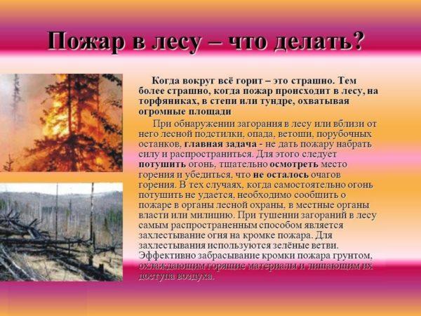 Что делать при пожаре в лесу инструкция