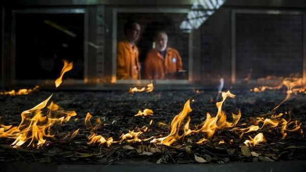 Пиротрон - лабораторная установка для исследования лесных пожаров