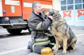 Cобаки пожарных
