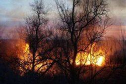 Противопожарное обустройство леса
