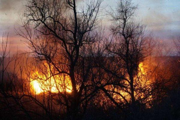 Противопожарное обустройство лесов