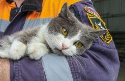 Животные спасают хозяев от пожара